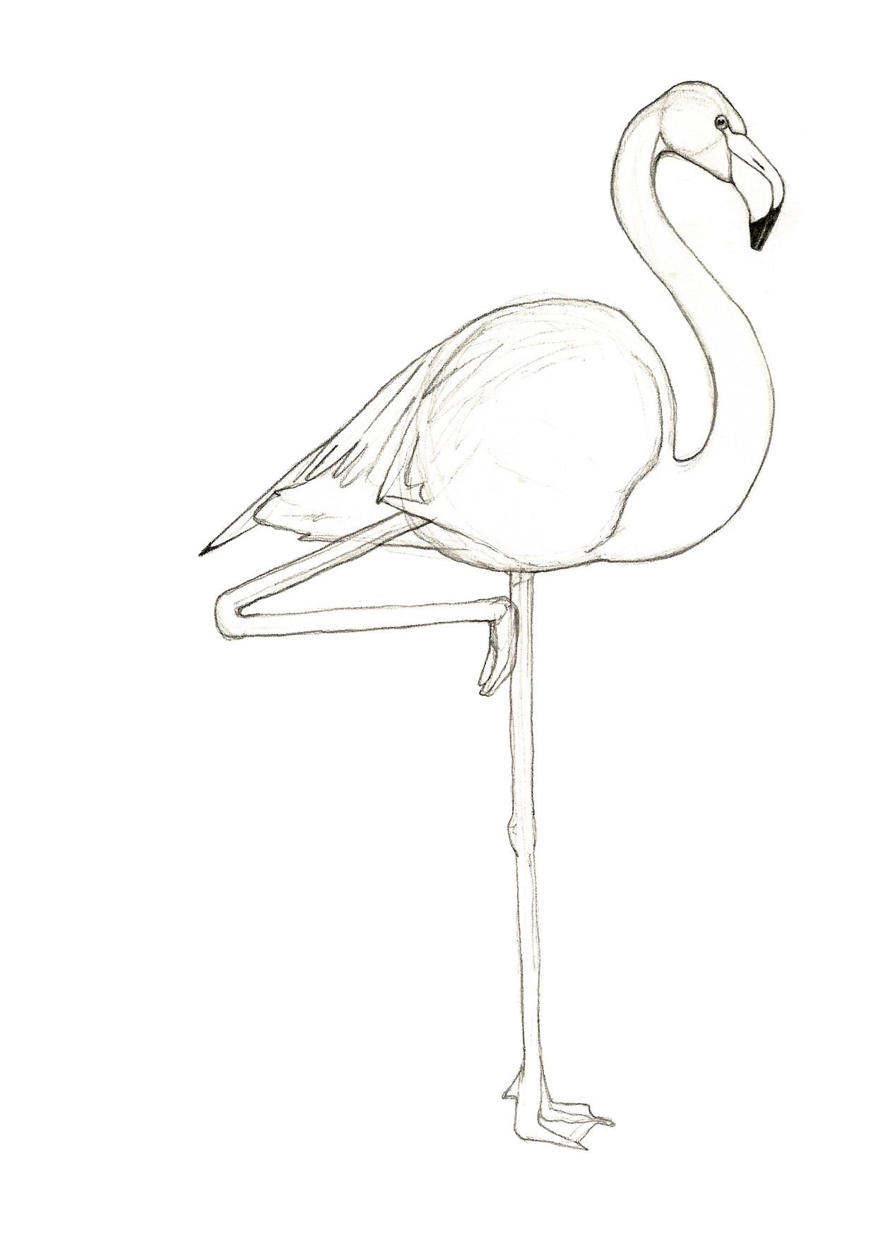 then also drew a flamingo, and then another that I coloured.